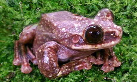 Frog goes extinct, media yawns