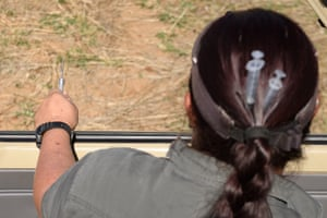 Veterinarian Michelle Otto wears a syringe in her hair as she holds a tranquiliser dart during a day of horn trimming.