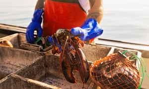 A lobster fisherman in Maine. Right whales can become entangled in the ropes used for fishing.