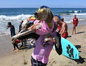 California, US: surf dog Derby and owner Kentucky Gallahue leave the water after competing in the tandem event during the 9th annual Surf City Surf Dog event at Huntington Beach.