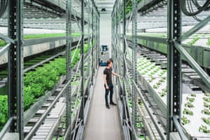 Jasper Van Beek, during a daily check at Vaxa's facilities, the only vertical farm in Iceland.