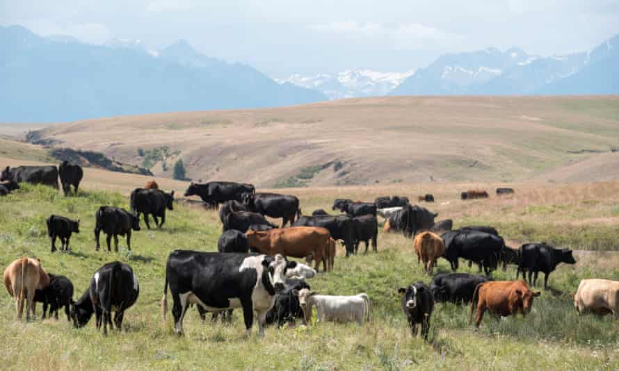 Both conservationists and ranchers have invested in a partnership staked on continuous improvement for the long haul.