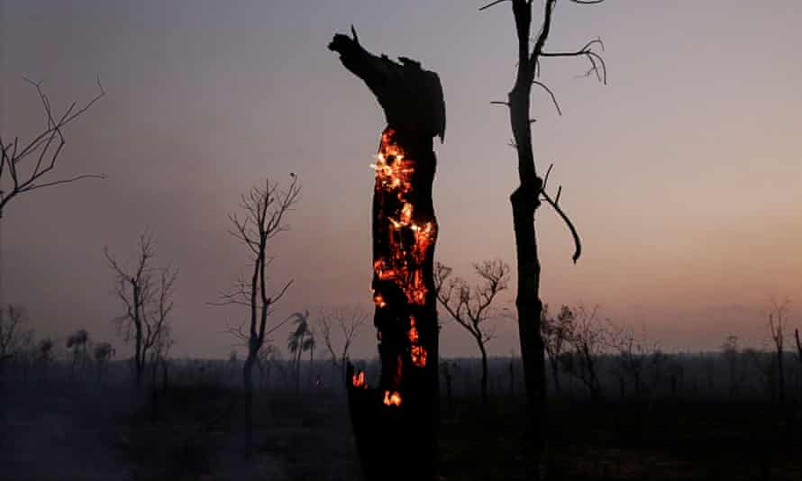 A tree burns after a wildfire in Bolivia