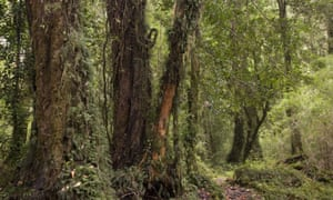 Cloud forest in the Alerce Andino National Park in Chile.