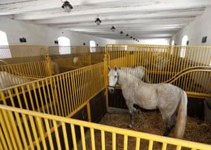 Inside the Kladruby stables