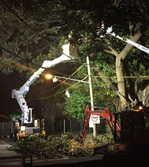Arborists chopping the so-called 'Tree of Knowledge' in Randwick, which was planted in 1860, on Sunday night.