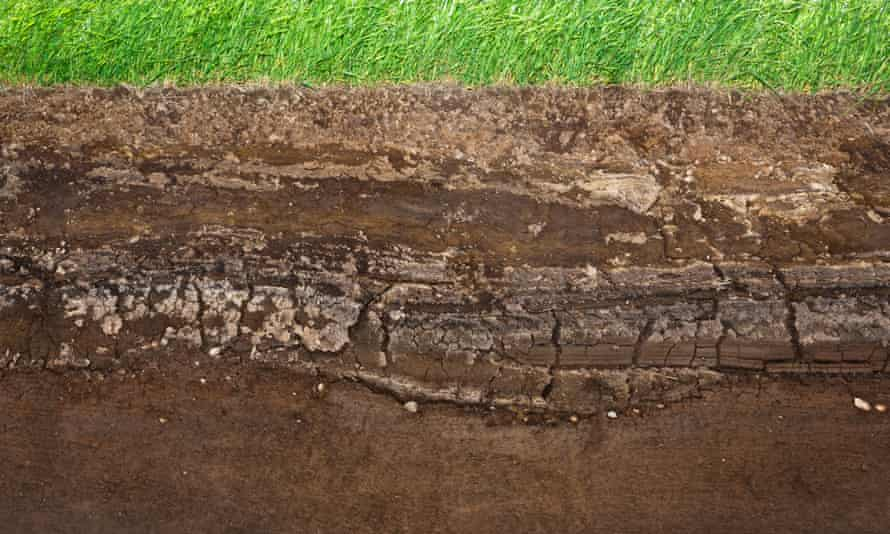 Layers of underground soil seen under grass. It is believed that a quarter of species on the planet live in the soil.