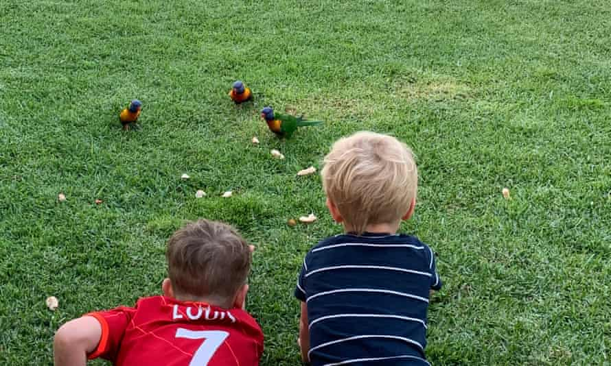 Seven-year-old Louis and three-year-old Max with rainbow lorikeets on their lawn.