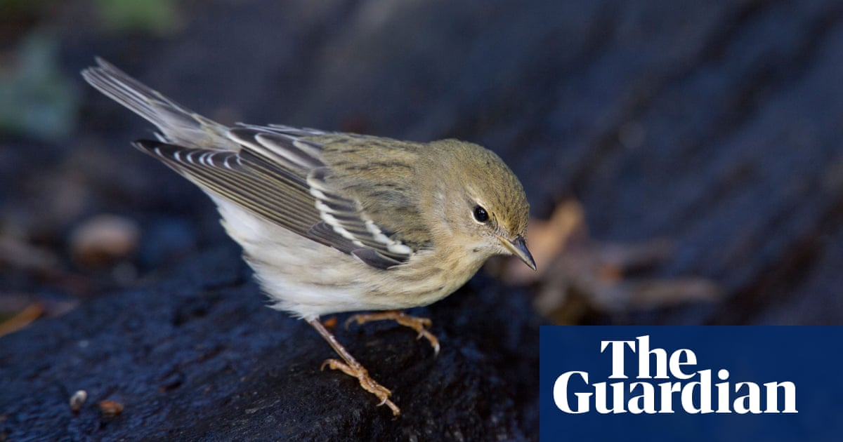 City flights: birds flocked to urban areas as Covid kept people home, study finds