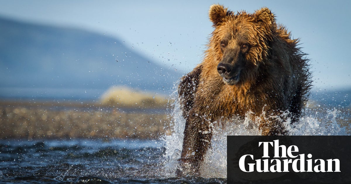 Boy 11 shoots charging bear to save fishing party in alaska us a brown bear in alaska an 11 year old boy shot a bear publicscrutiny