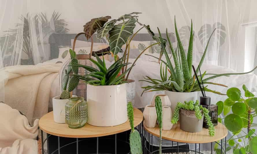 Green recovery: 'Nurturing indoor gardens helps fulfil our innate human need for control and provides a feeling of security'.