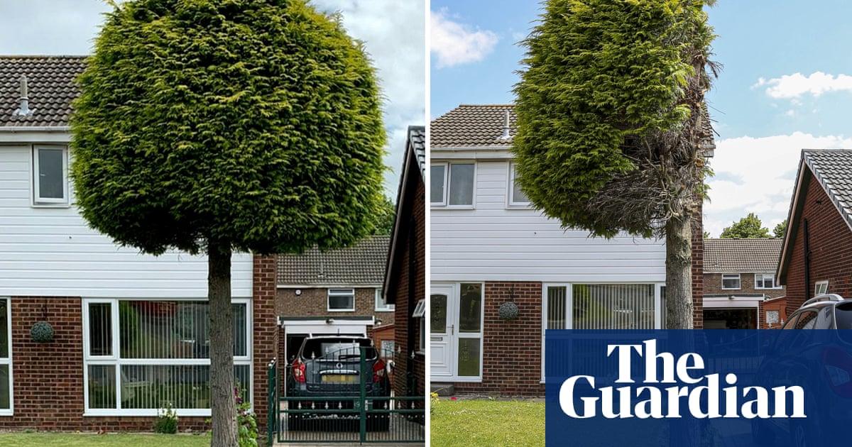 Cut-down fir tree becomes Sheffield attraction after neighbour dispute