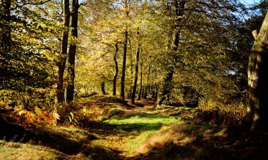 Cheshire; Nether Alderley, autumn path through woodland. UK.