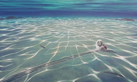An artistic reconstruction of the floating ammonite leaving behind the drag mark.