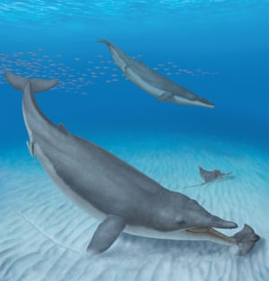 Two Mystacodon selenensis individuals diving down to catch eagle rays along the seafloor of a shallow cove off the coast of present-day Peru.
