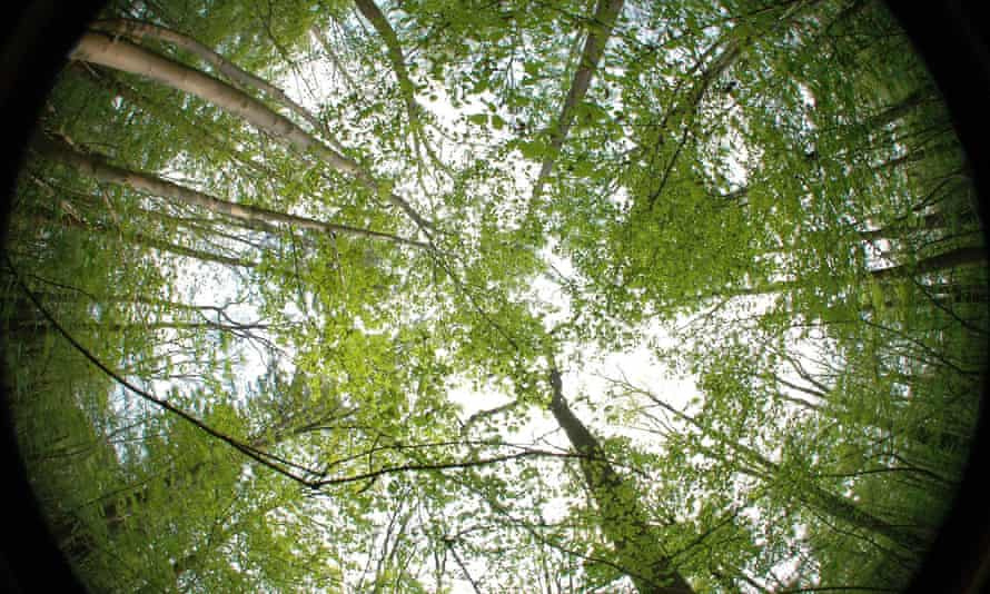 Hemispherical photograph of a beech forest. The denser the canopy, the greater the cooling effect in the understorey and on the forest floor.