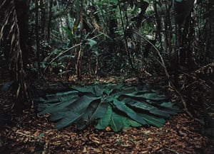 Richard Long's A Circle in the Amazon, Brazil, 2016.