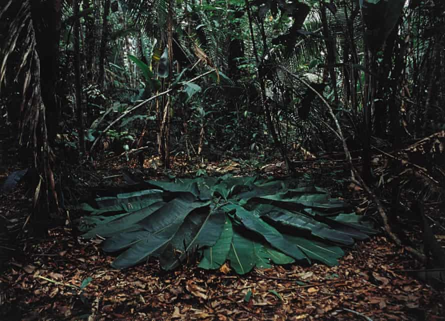 Richard Long's A Circle in the Amazon, Brazil, 2016.