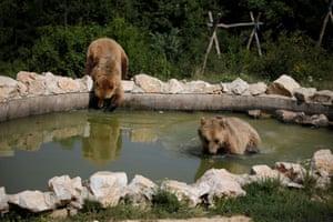 Bears play at a sanctuary in Pristina, Kosovo