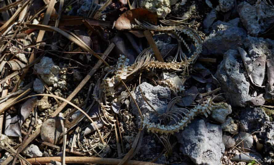 A small snake skeleton lies on the ground.