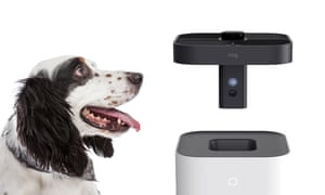 amazon ring drone with an english setter looking at it