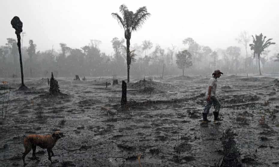 'The Amazon - historically a great carbon absorber - now releases more carbon than it stores, which adds to, rather helps to reduce, our global climate crisis.'