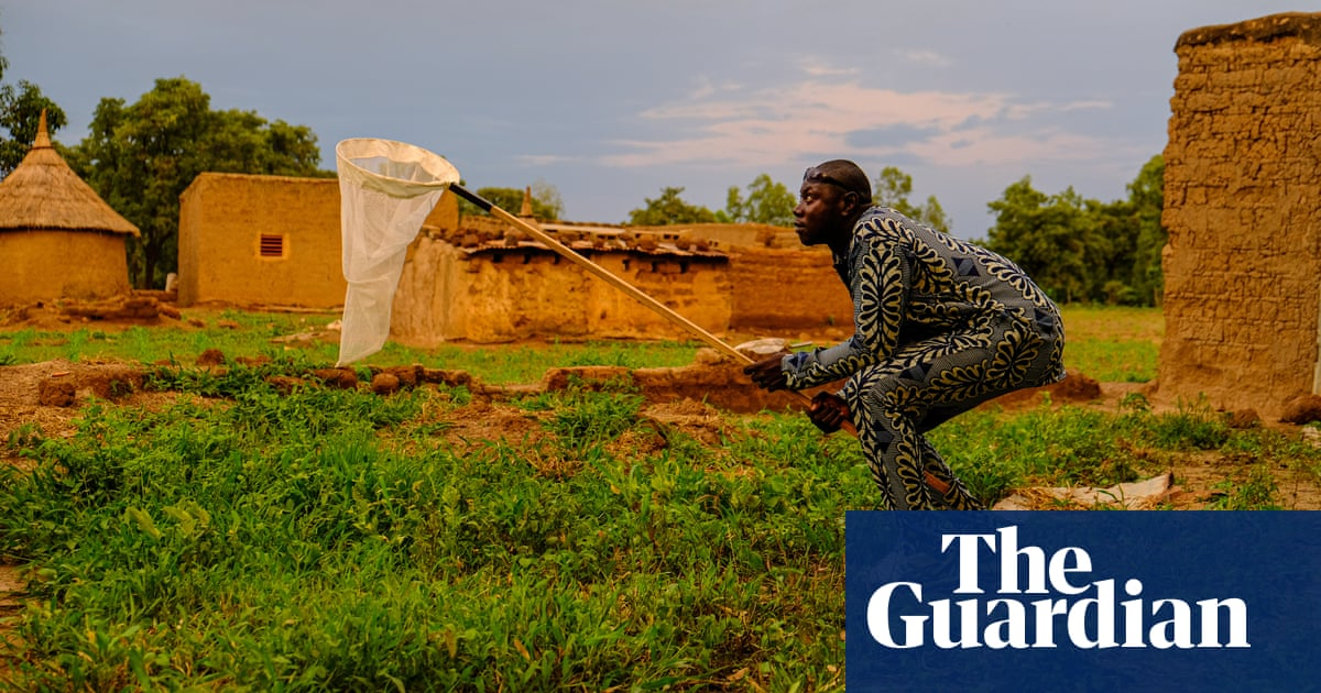 Wiping out the daughters: Burkina Faso's controversial mosquito experiment