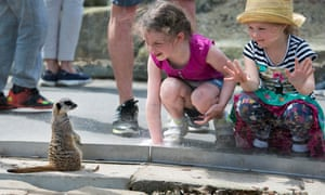 Children view a meerkat at Cannon Hall Farm, Barnsely, Yorkshire, UK.