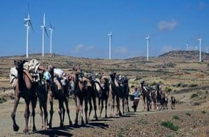 Camels walk along the road near turbines at Ashegoda wind farm in Ethiopia's northern Tigray region. The farm has a capacity of 120MW.
