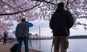 Photographers line up to shoot the blooming cherry tree blossoms that ring the tidal basin in Washington, DC.