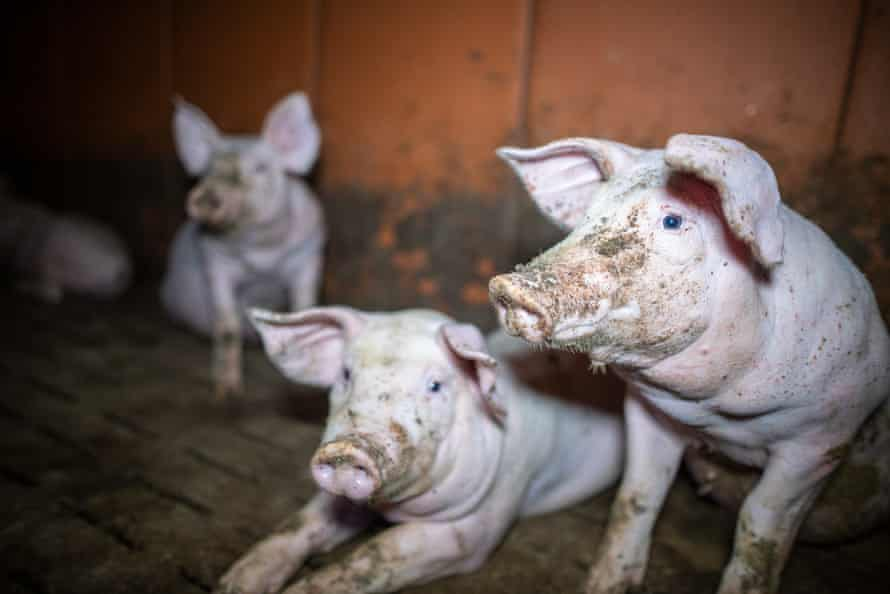 Video footage released by French animal welfare group, L214, 2 December 2020