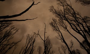 After fire burnt through the bush at Mallacoota
