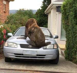 how to fix a dent in a car bonnet