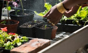 Gardening session run by South London and Maudsley NHS trust for asylum seekers and refugees with PTSD.