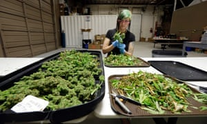 Despite the DEA's resistance to reclassification, marijuana has a broad list of potential medical applications, from treating pain to neurological diseases.