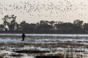 Ducks take flight as the opening shots of Victoria's duck hunting season are fired at Little Lake Buloke
