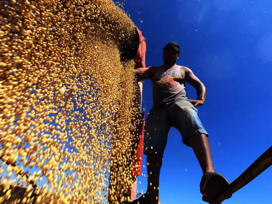 Soya beans are loaded on to a truck, Rio Grande do Sul, Brazil