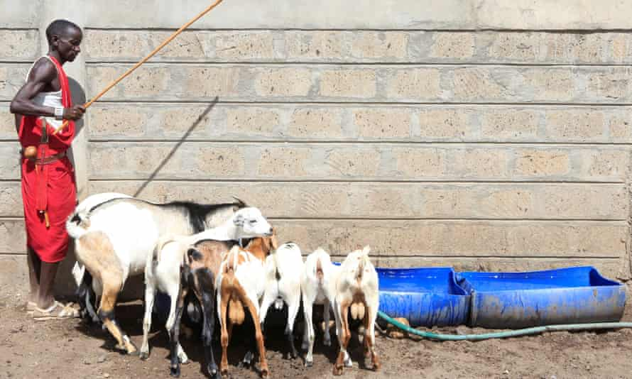 Farmers give bottled water to their goats in Magadi, Kenya, in March 2017.