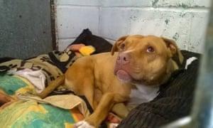 Stella The Dog in prison
