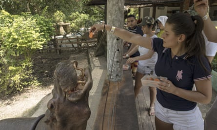 A visitor feeds a hippo at the Hacienda Nápoles, now a park in northern Colombia.