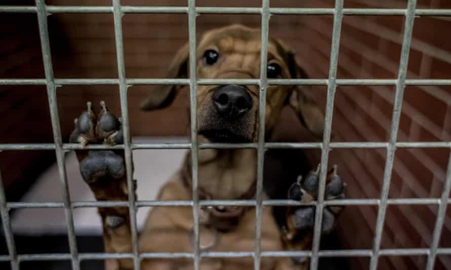 A dog in an animal shelter. LA animal services have voted for a feasibility study and an analysis of the benefits and risks.