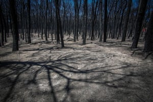 Burnt trees are pictured in the Vesuvius National Park near Naples, Italy