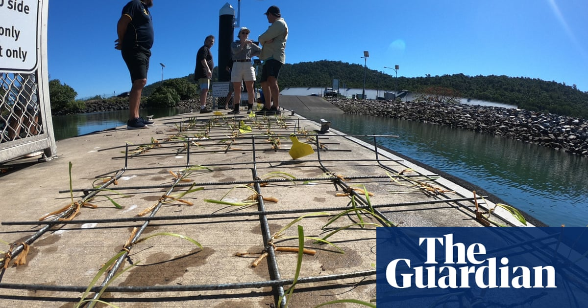 Queensland scientists brave crocodiles and deadly jellyfish to regrow seagrass