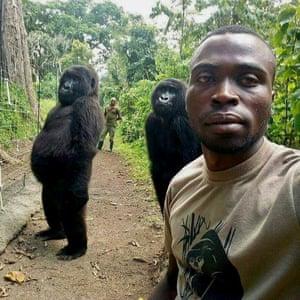 Mathieu Shamavu, a ranger and caretaker at the Senkwekwe centre for orphaned mountain gorillas in DRC, poses for a photograph with female orphaned gorillas, Ndakazi and Ndeze, in Virunga national park.