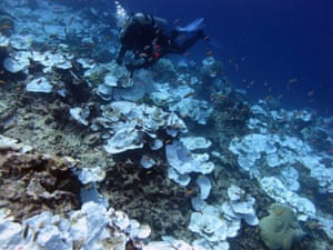 Bleaching and dead coral around Jarvis Island, which is part of the US Pacific Remote Marine National Monument