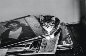 David Knopfler's kitten, 1979 from Jane Bown: Cats