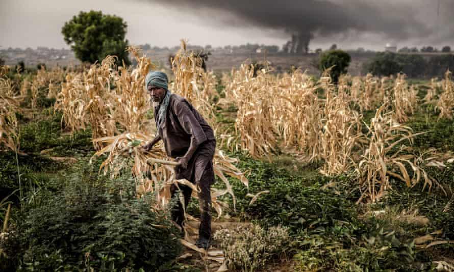 a farm in north Nigeria