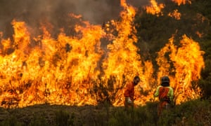 An estimated 280,000 hectares (690,000 acres) of forest in Portugal's central Pinhal interior region have been burned.