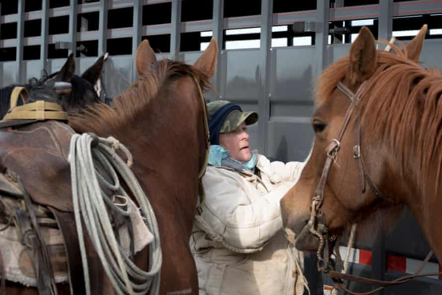 Phillips County, MT: Vicki Olson ties up horses on the morning of a branding at the French Ranch in Phillips County, Montana.