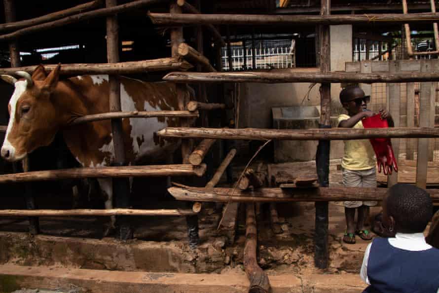 Martin Agaba, who works at the Kwagala urban farm